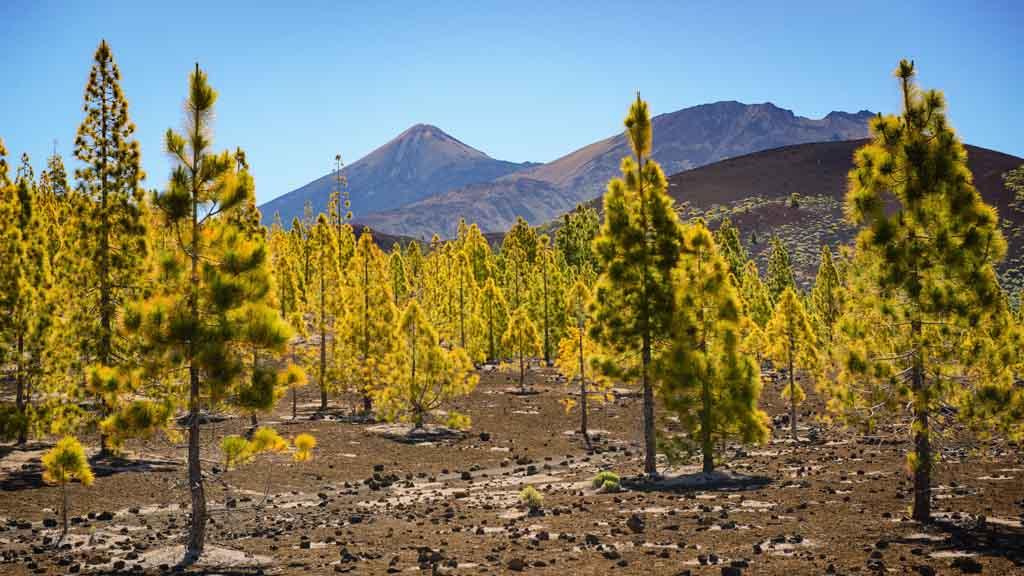 Pico del Teide - Wald - CrossFit 27 & CrossFit Survive Top Training Urlaub auf Teneriffa - Fitnessurlaub mit Reiseathleten