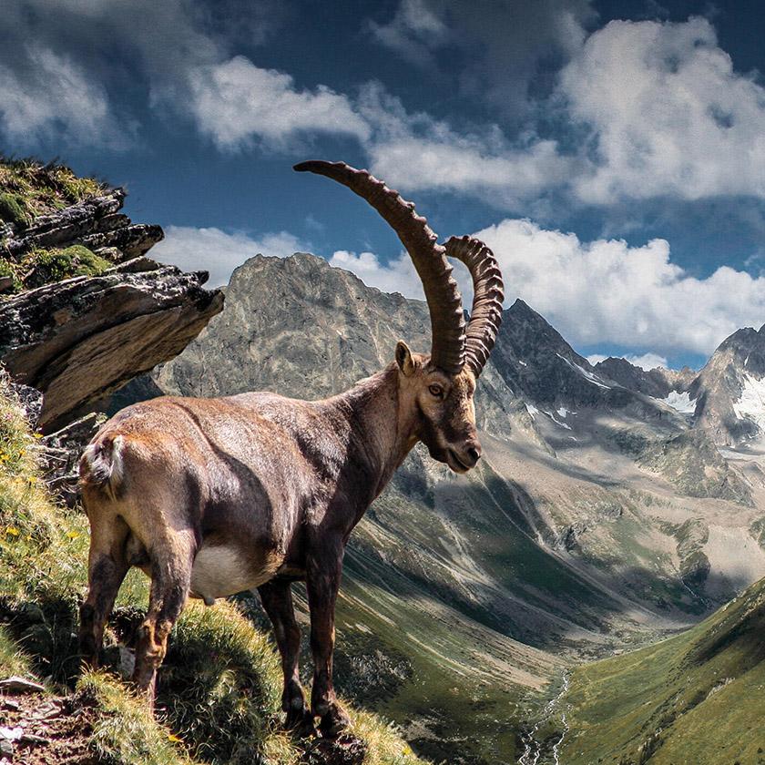 Fitnessurlaub in Österreich - Wandern in den BErgen Hotel 4 Jahreszeiten Pitztal - Fitnessreisen für Reiseathleten
